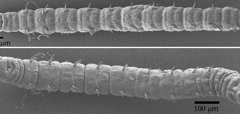 咋做到的!从恐龙时期至今 幽灵蠕虫样子一直没变